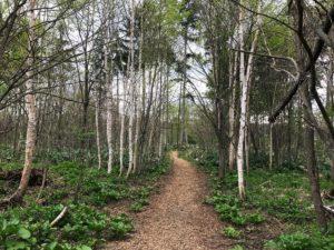 外国樹種見本林3