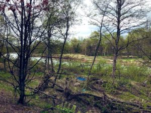 外国樹種見本林2